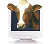cow logo